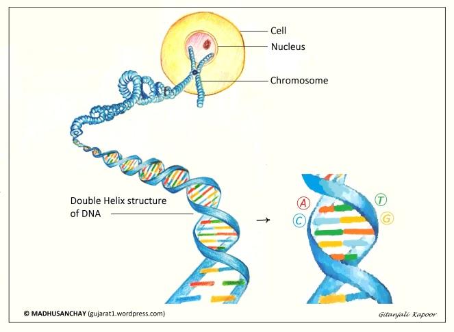 iDNA-D-helix-Madhusanchay-2-GK